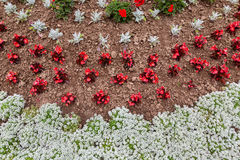 Annual Flower Bed Royalty Free Stock Photo