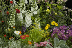 Annual flower garden. Annual flower garden with mixed collored flowers Stock Images