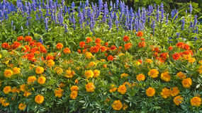 Annual flowers. These annual bedding flowers create a beautiful display of color stock image