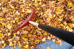 Annual Garden Chore royalty free stock images