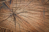 Annual growth rings Stock Photos