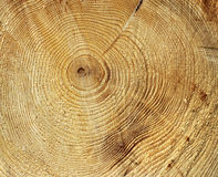 Annual growth rings. Circle pattern in tree stump stock image
