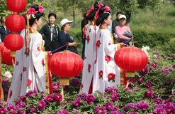 Admire the flower of the Emperor. During the annual Luoyang peony festival, in the botanical garden of the Sui and Tang city sites in Luoyang, a large art stock photo