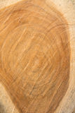 Annual ring. Cross section of tree after saw Royalty Free Stock Image