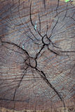 Annual ring wood crack damage texture Royalty Free Stock Image