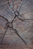 Annual ring wood crack damage texture Stock Image