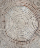 Annual rings. And cracks in old wood Stock Photography
