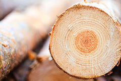 Annual Rings On Sawn Pine Tree Timber Wood Stock Photos