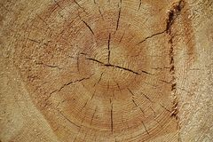 Annual Rings On Pine Trunk Stock Images