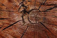 Annual rings on the saw cut of a tree trunk background. Royalty Free Stock Photos