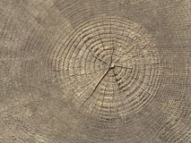 Annual Rings on Tree Stump Stock Photography