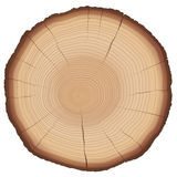 Annual Rings Tree Trunk Cross Section Stock Image