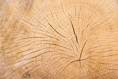 Annual rings of a tree Royalty Free Stock Photos