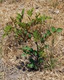 Annual seedling tree Royalty Free Stock Images