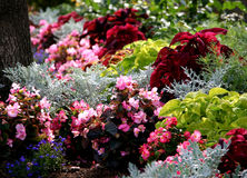 Annual summertime flowers bed Stock Images