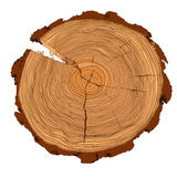 Annual tree growth rings with brown tones drawing of the cross-section of a tree trunk. Isolated on white. Vector illusration Royalty Free Illustration