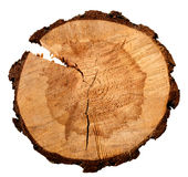 Annual tree growth rings of the cross-section of a tree trunk isolated on white Stock Image