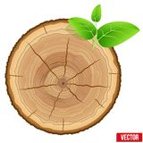 Annual Tree Growth Rings Of The Cross-section Wood Stock Photography