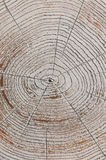 The annul growth rings. On an old stump Royalty Free Stock Photos