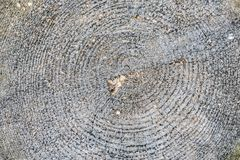 Annular rings on a stump of a slaughtered tree in a forest. Detail of the annular rings on a stump of a slaughtered tree in a forest in winter stock photography