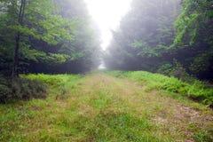 Annullando nella foresta Immagine Stock Libera da Diritti
