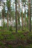 Annullando nella foresta Fotografie Stock Libere da Diritti