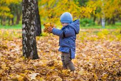 1 ano de bebê idoso anda nas folhas caídas Fotografia de Stock