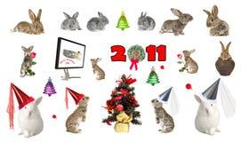 Ano de uma lebre Foto de Stock
