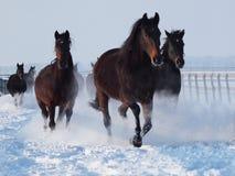 Ano novo de cavalo Imagens de Stock