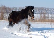 Ano novo de cavalo Imagem de Stock Royalty Free