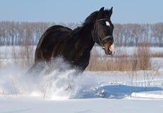 Ano novo de cavalo Fotografia de Stock Royalty Free