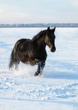 Ano novo de cavalo Imagens de Stock Royalty Free