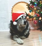 Ano novo feliz de Huskie foto de stock royalty free