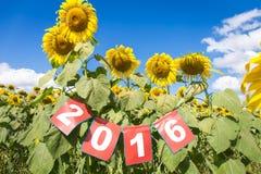 Ano novo feliz 2016 no campo do girassol Fotos de Stock Royalty Free