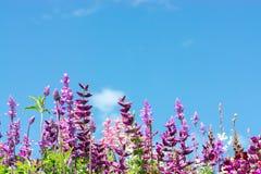ano novo feliz 2007 Prado colorido da flor com flores do verão Rosa, roxo Imagens de Stock Royalty Free