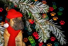 Ano novo, Natal, Santa Claus no ano do cão no fundo dos traços de patas do cão Retrato do close up do Af sul foto de stock