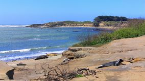 Free Ano Nuevo State Park, Big Sur Coast, California, United States - Juvenile Elephant Seals On Pacific Beach Stock Photos - 150214353