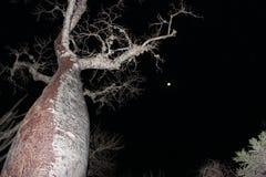 Anochecer en el bosque espinoso de Ifaty, Madagascar Imagenes de archivo