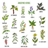 Anodyne herbs. Hand drawn set of medicinal plants Stock Images