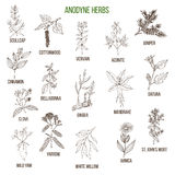 Anodyne herbs. Hand drawn set of medicinal plants Stock Photo