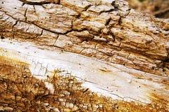 Anold腐烂的树干 免版税库存照片