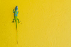 Anole lizard Stock Photo