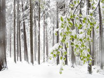 Anomalía de la primavera fotos de archivo libres de regalías