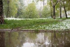 Anomalías del tiempo Nieve en mayo Imagen de archivo libre de regalías