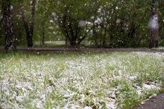 Anomalías del tiempo Nieve en mayo Foto de archivo libre de regalías