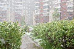 Anomalías del tiempo Nieve en mayo Fotos de archivo