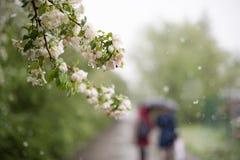 Anomalías del tiempo Nieve en mayo Imágenes de archivo libres de regalías