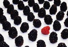 Anomal莓果 免版税库存照片