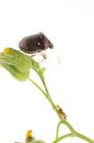 Anomalie d'écran protecteur d'insecte photos stock