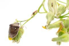Anomalie d'écran protecteur d'insecte photo libre de droits